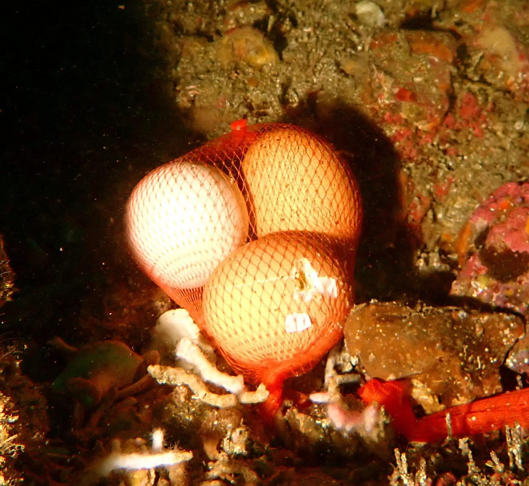 海の中に卵