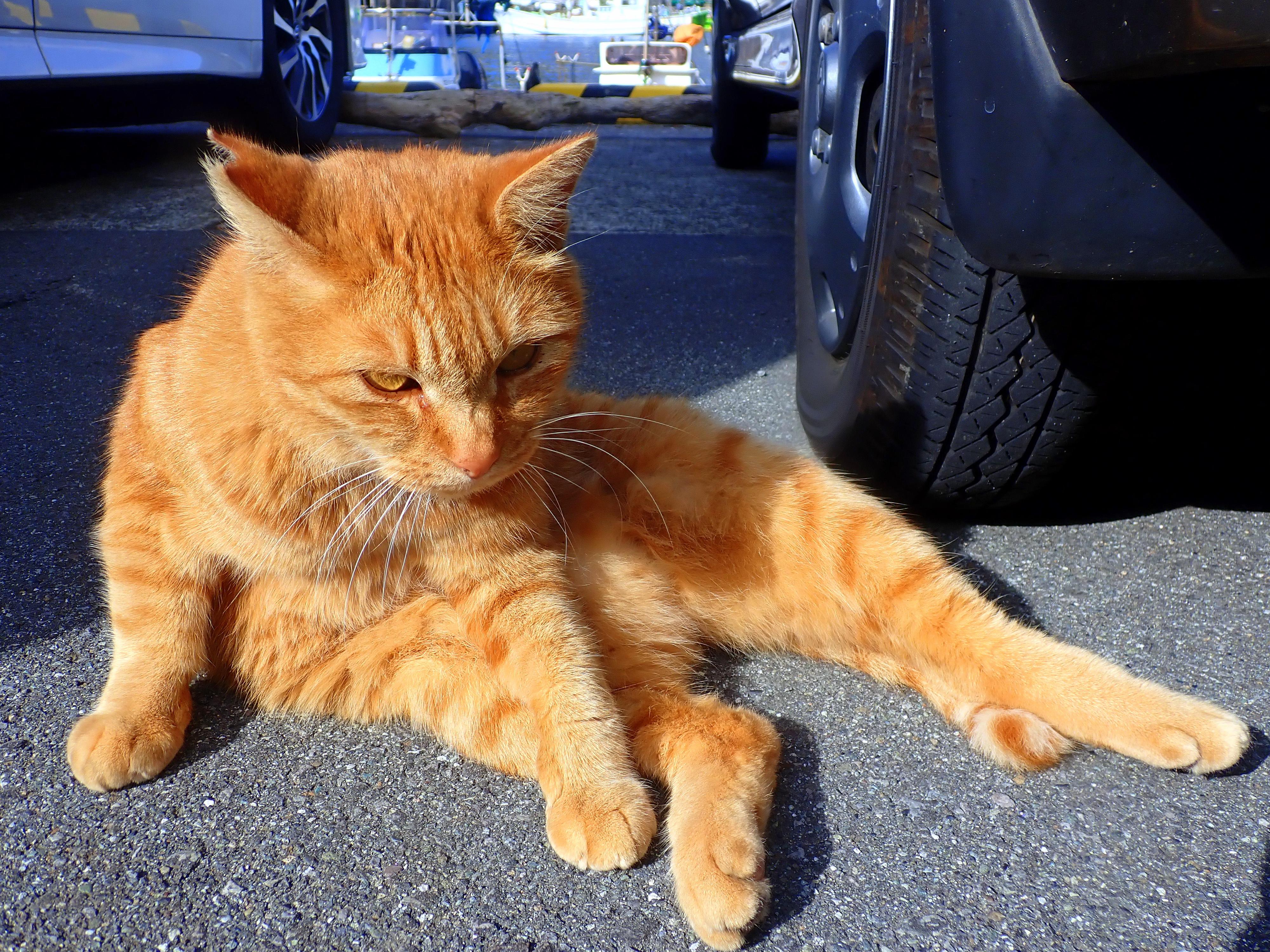 猫とランチタイム